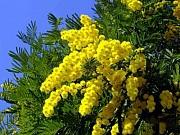 Растения Архангельск