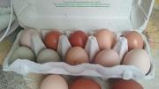 Яйчки Воскресенск