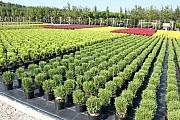 Торговля оптовая цветами и растениями Москва